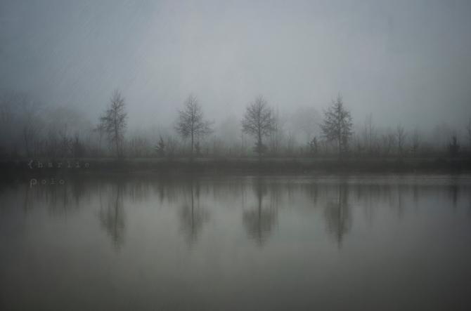 Trees(tesse) © Gregory Criteau